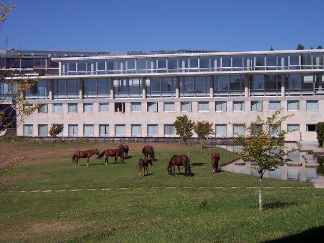Campus de Vigo, con caballos.